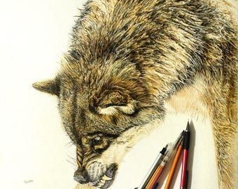 Wolf Colored Pencil & Ink Drawing