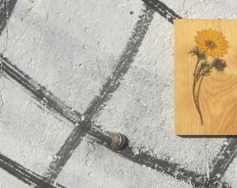 Wooden Print - Adonis Vernalis | Wood | Print | Wall Art | Decor | Natural Prints | Surf Art