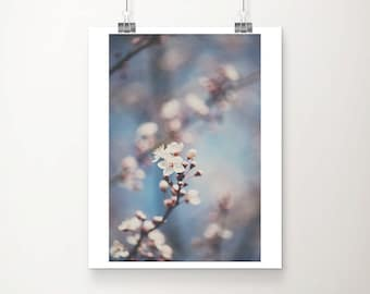 apple blossom photograph white flower photograph tree photograph spring photograph nature photography floral print blossom print