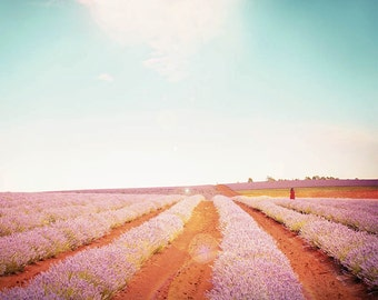 nature photography lavender fields landscape photography summer 8x10 20x30 fine art photography floral flowers photography french lavender
