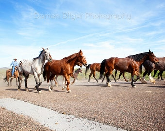 The Running of the Horses