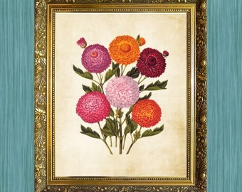 Bunch of Flower Print Natural History Art Print Floral Art Pink Botanical Print