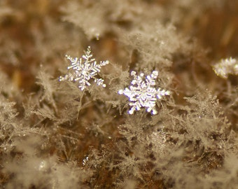 Two Snowflakes, Precious Couple, Romantic Photograph, Winter Charm, Sacred Geometry, Photograph or Greeting card