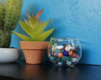 Crassula Succulent in Terracotta Pot
