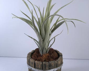 Artificial Air Plant Planter / Artificial Succulent / Succulent Planter / Air Plant