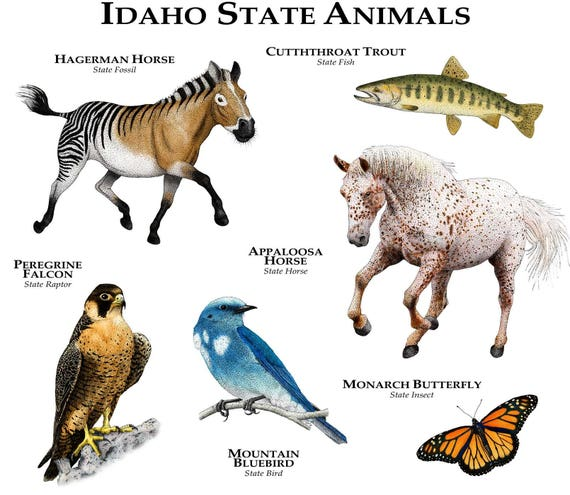 Idaho State Fossil