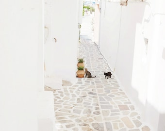 "Greece cat photograph minimal white wall decor art two cats Greece print cat wall art ""Cats in Whitewashed Alley"""