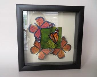 Eco Friendly Monarch Butterfly Specimen Wall Art
