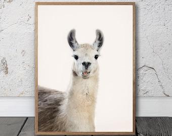 Llama Print - Alpaca Print, Digital Download, Animal Photo, Animal Poster, Camel Print, Quirky Wall Art, Home Decor, Farm Animal Art