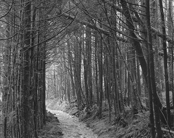 The Leaving Mt. LeConte Black and White Photograph