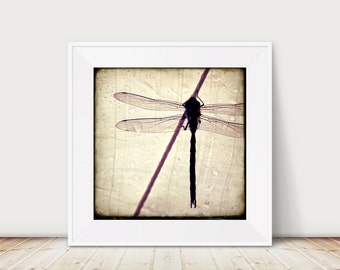 Resting Dragon - Fine Art Print Dragonfly water droplets rain rope wings macro photo photography nature