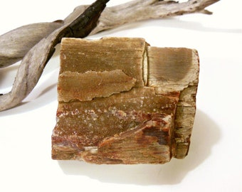 Petrified Wood Specimen, Natural Heart Rock, Nature Supplies, Tree Wood Rock, Fossilized Wood Fossil