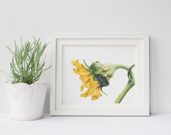 Sunflower print of watercolour painting S090DL, downloadable print, digital print, Sunflower watercolour painting print