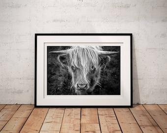 Highland Coo I -  Isle of Lewis - Scotland -  Fine Art Photo Print -  Landscape Photography