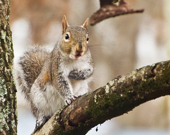 "Squirrel ""Who Me"" - Photography Print"