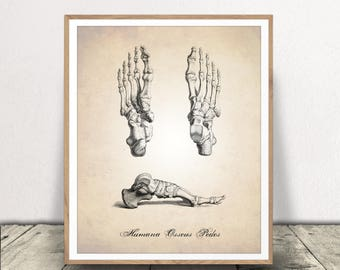 Human Anatomy Foot, Human Anatomy PRINTABLE, Human Anatomy, Human Feet Illustration, Foot Print, Feet Print, Human Anatomy INSTANT DOWNLOAD