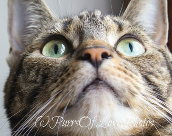 Green-Eyed Tabby Cat Gazing Up Photo. Instant Download.