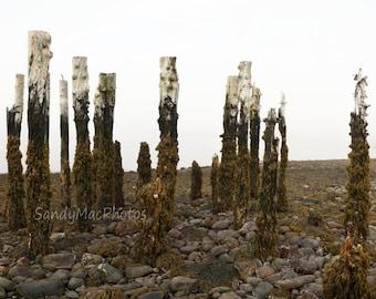 Weathered Souls, Seaside Landscape photography, Ocean scene, Old wharf