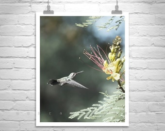 Hummingbird Art, Bird Photography, Picture on Canvas, Bird Art, Bird in Flight, Vertical Print, Bird of Paradise, Canvas Photo, Birder Gift
