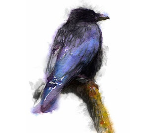 Crow sketch | Limited edition fine art print from original drawing. Free shipping.