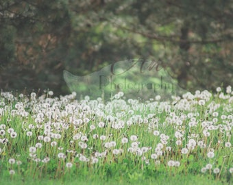 Dandelion Field and Forest Digital Photography Backdrop Background