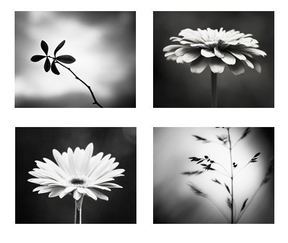 Black and white photography set four photographs 4 nature flower modern prints dark grey decor gray wall art botanical photo set artwork