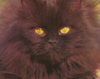 Vintage Image (1975): Long-haired Black Cat