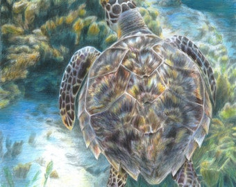 Turtle Art SWIMMING TURTLE print by Carla Kurt Signed 11 x 14 wwao ebsq