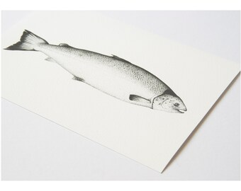 Salmon fish mounted print, specimen art print, pointillism, ink illustration, dad fishing, fathers day, taxidermy science fish illustration