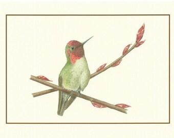 Set of 4 Anna's Hummingbird Cards