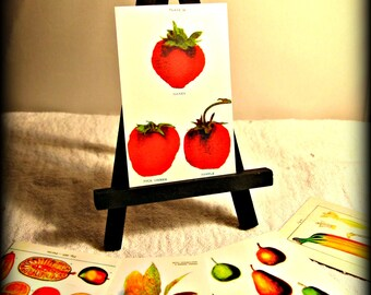 Mini Easel Art Set - Vintage Botanical Art (shipping included)