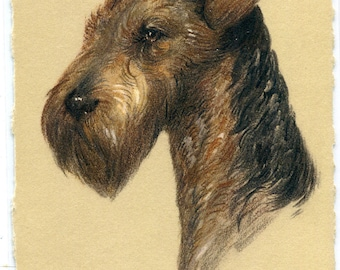 Airedale Terrier Dog Portrait artist signed R F Gaulis postcard