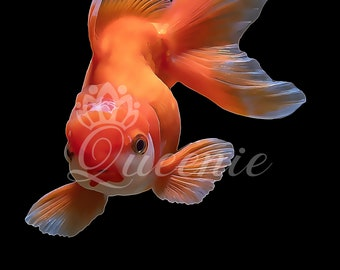 Fancy Goldfish Painting