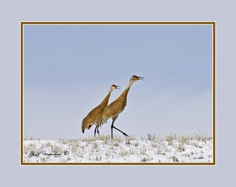 Sand Hill Cranes, Original Fine Art Photography