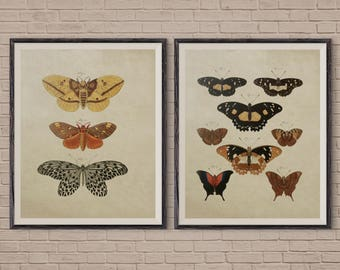 Butterfly Art Print Set of 2, Vintage Butterfly, Butterfly Art, Butterfly Poster, Butterfly Print, butterfly art print, butterfly wall art