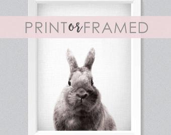Lil' Darlings 11x14 Bunny Print | Rabbit | Close Up | Cute | Woodland Animals | Farm Animals | Black + White | Photography | Modern Nursery