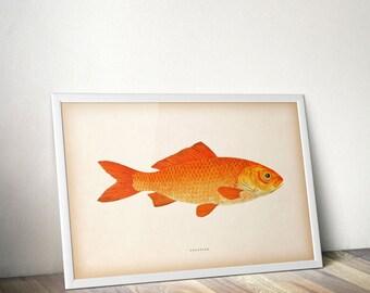 Vintage fish print, Fish art, Nautical printables, Wall art prints, Digital print, Nautical vintage, 8x10 print, 11x14 print, Printable, JPG