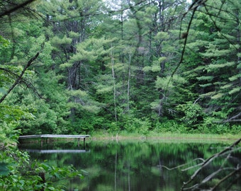 Maine Woods//Brownfield Nature Photography Digital Download