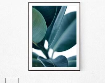 Plant Print, Fig Tree Print, Ficus Elastica, Botanical Prit, Botanical Poster, Scandinavian Print, Herb Prints, Tropical Leaf Poster