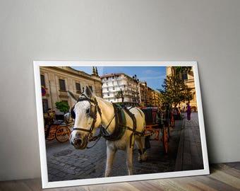 Horse Carriage, Seville, Seville Spain, Seville Print, Seville Photography, Spain Photo, Travel Photography, Europe Photography, Europe