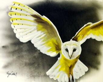 Barn Owl Art Print 8x10 Watercolor
