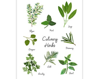 Culinary Herbs Art Print - Kitchen Art Home Decor