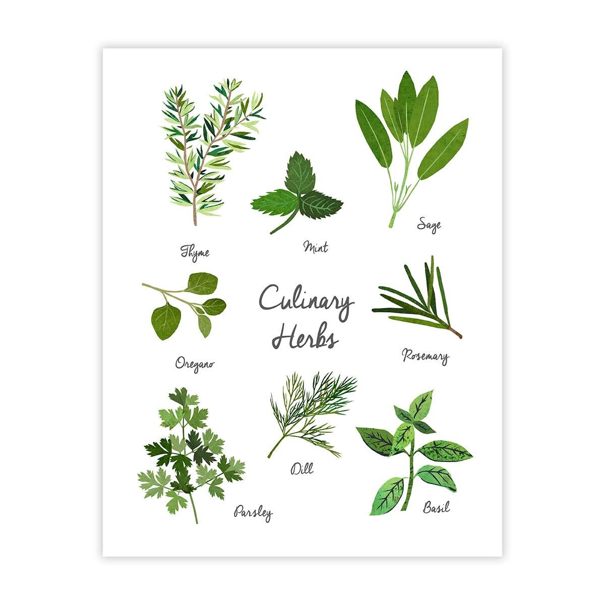 Culinary Herbs Art Print Kitchen Art Home Decor
