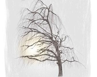 Giclée Print - Weeping Willow