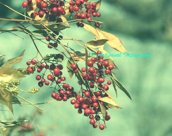 red berries on branch, red nature print, red berries, red berries photograph, Autumn Red Berries Photo, Red Decor, Nature Art, Red Art