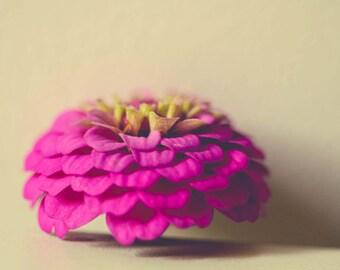 Zinnia Photograph - Floral Wall Art - Pink - Art For Girls Room - Minimalist - Flower Photography - Gray Art - Shabby Chic - Dreamy - Decor