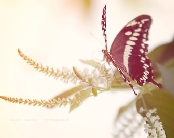 Spring Wall Decor - butterfly photography, nature print - art print, nature wall art, creme, romantic, color photograph, flower print