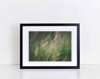 "Fine Art Wall Decor Floral Print: Summer Meadow (12"" x 10"")"