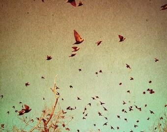 The Birds 2 / photography / bird print / brown aqua mint green / wall decor / winter art / spring art / nature / fine art print / wall decor