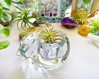 A set! Airplant and Airplant holder, Airplant set, Planter Set, Glass planter, Tillandsia Airplants, Houseplants, Cat Planter, Cat Lady Gift
